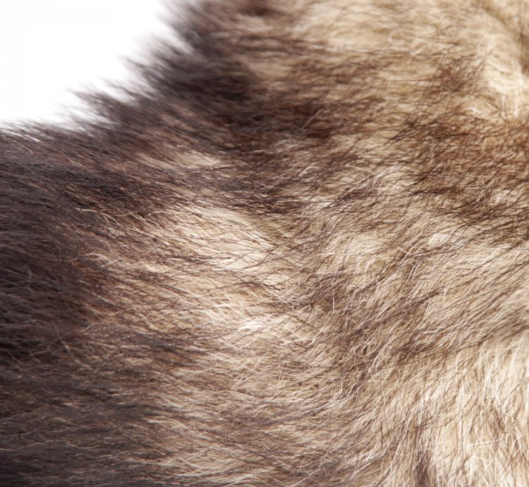 Untamed Fox Tail Anal Plug